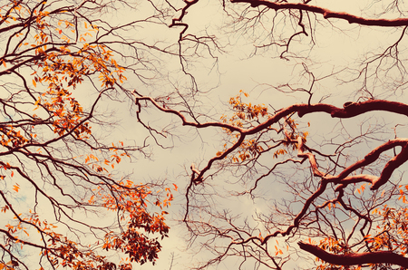 Autumn season and nature tree branch on sky and white clouds abstract texture background. Ecology environment and travel relax concept. Vintage tone filter effect color style.