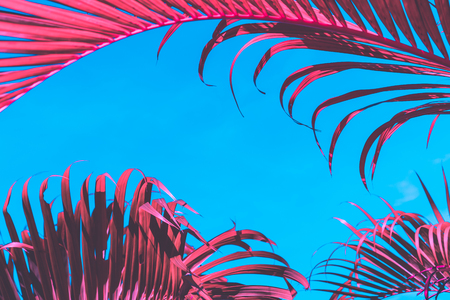 Pink palm leaf pattern texture on blue sky abstract background. Copy space for graphic design tropical summer concept. Vintage tone filter effect color style. 版權商用圖片