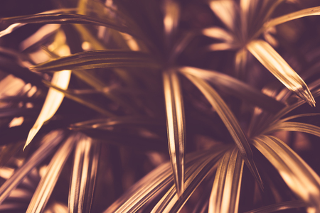 Yellow palm leaf pattern texture abstract background. Copy space for graphic design tropical summer concept. Vintage tone filter effect color style. Stok Fotoğraf
