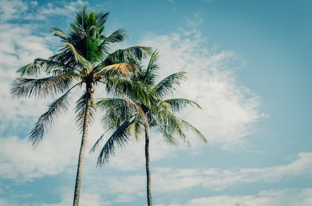 Copy space of tropical palm tree with sun light on blue sky and white cloud abstract background. Summer vacation and nature travel adventure concept. Vintage tone filter effect color style. 스톡 콘텐츠 - 118400798