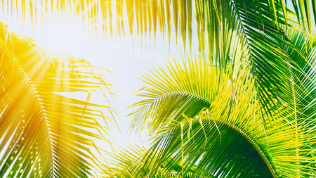 Summer vacation and nature travel adventure concept. Copy space tropical palm tree with sun light on blue sky and cloud abstract background. Vintage tone filter effect color style.
