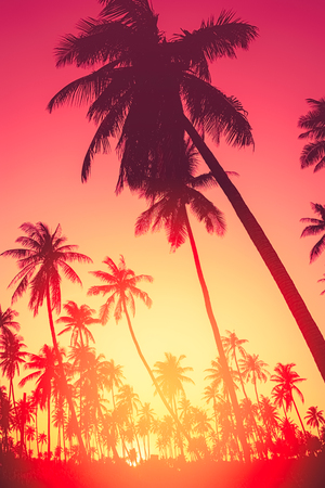 Summer vacation and nature travel adventure concept. Copy space of silhouette tropical palm tree with sun light on sunset sky and cloud abstract background. Vintage tone filter effect color style.