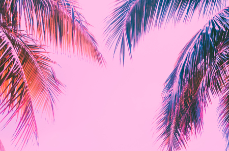 Copy space pink tropical palm tree on sky abstract background. Summer vacation and nature travel adventure concept. Vintage tone filter effect color style. Imagens