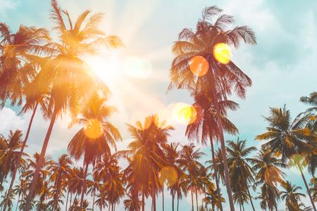 Vacanze estive e concetto di avventura di viaggio nella natura. Palma tropicale con la luce del sole variopinta del bokeh sul fondo dell'estratto della nuvola del cielo di tramonto. Stile di colore effetto filtro tono vintage.