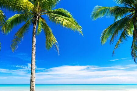 Summer vacation and holiday travel concept. Copy space of tropical beach with palm tree on blue sky and white clouds abstract background. Vintage tone filter effect color style. 스톡 콘텐츠