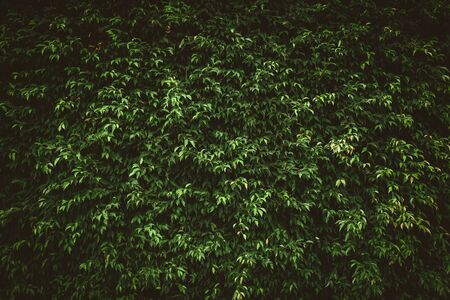Close up tropical nature green leaf texture abstract background. Copy space ecology environment and travel adventure concept. Shallow depth of field. Vintage tone filter effect color style. 스톡 콘텐츠