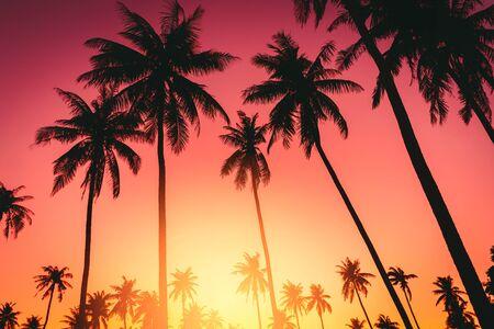 Copiez l'espace du palmier tropical silhouette avec la lumière du soleil sur le ciel coucher de soleil et le fond abstrait de nuages. Vacances d'été et concept d'aventure de voyage nature. Style de couleur d'effet de filtre de ton vintage.