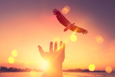 Man open hand up with eagle bird flying on tropical sunset background. Freedom and feel good concept. Vintage tone color style.