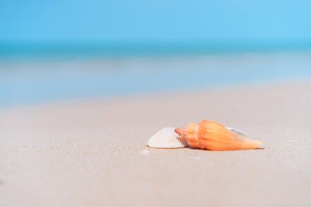 Copy space of sand beach and seashell texture abstract background. Summer vacation and travel relaxation concept. Vintage tone filter effect color style.