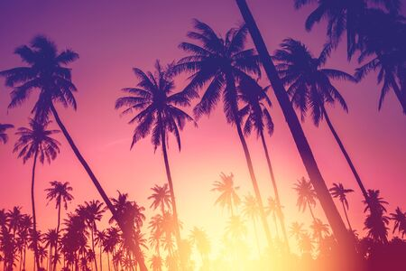 Copy space of silhouette tropical palm tree with sun light on sunset sky and cloud abstract background. Summer vacation and nature travel adventure concept. Pastel tone filter effect color style. 免版税图像