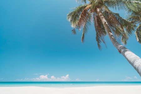 Palm tree at tropical beach on blue sky Banco de Imagens - 164033583