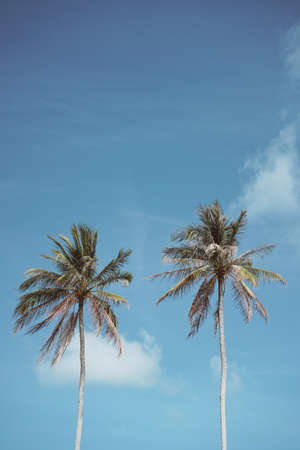 Tropical palm tree with blue sky and cloud