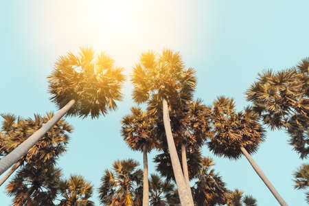 Tropical palm tree with sun light on sunset sky and cloud abstract background. Summer vacation and nature travel adventure concept. Vintage tone filter effect color style. Banco de Imagens