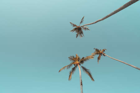 Tropical palm tree with blue sky and cloud abstract background. Summer vacation and nature travel adventure concept. Pastel tone filter effect color style. Banco de Imagens