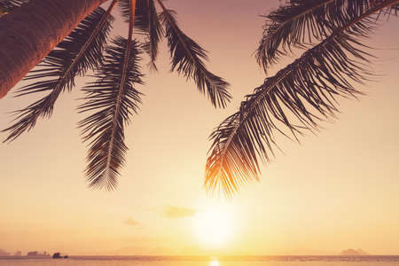 Palm tree at tropical beach on sunset sky abstract background. Summer vacation and nature travel adventure concept. Vintage tone filter effect color style.