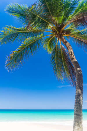Palm tree at tropical beach on blue sky abstract background. Summer vacation and nature travel adventure concept. Vintage tone filter effect color style.