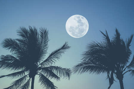 Tropical night. Full moon and palm tree abstract background. Copy space of nature environment and travel adventure concept. Vintage tone filter effect color style.