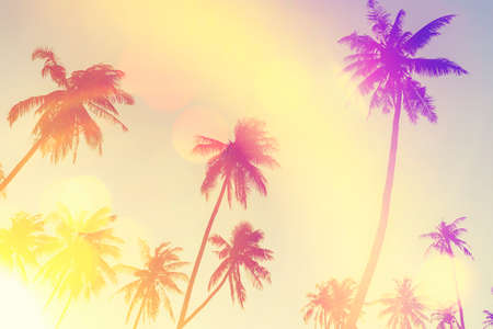 Tropical palm tree with sun light on sunset sky and cloud with colorful bokeh abstract background. Summer vacation and nature travel adventure concept. Vintage tone filter effect color style. Stock Photo