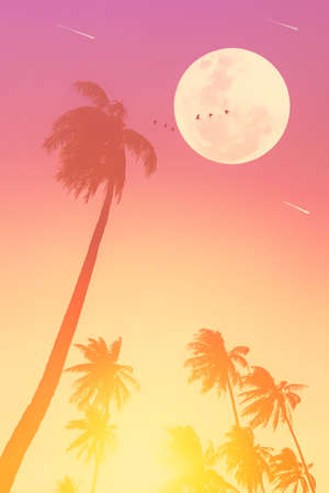 Tropical night. Full moon and palm leaf birds fly abstract background. Copy space of nature environment and travel adventure concept. Vintage tone filter effect color style. Stock Photo