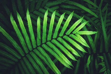 Close up tropical nature green leaf texture abstract background. Copy space ecology environment and travel adventure concept. Shallow depth of field. Vintage tone filter effect color style. Stock Photo