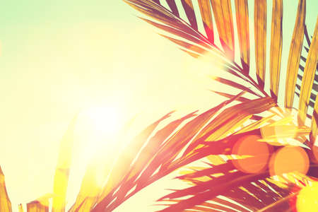 Tropical palm tree with sun light on sunset sky and cloud abstract background. Summer vacation and nature travel adventure concept. Vintage tone filter effect color style. Stock Photo