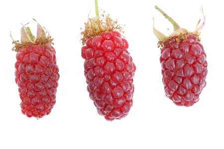 Raspberries fresh out of the garden, isolated on background Stock Photo - 7219767