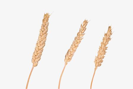 Grain isolated on background