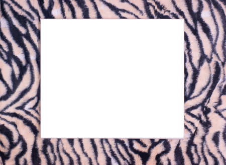 Isolated white space with tigerprint border