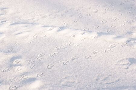 Several duck trails in the snow