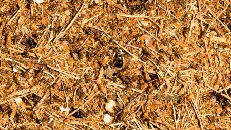 ameisenhaufen: Hintergrund der Ameisen in einem Ameisenhaufen