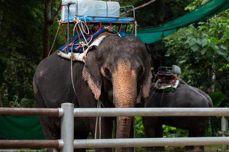 Suratthani, Thailand - December 2, 2018: Elephant Tricking, Koh Samui, Thailand at Namuang Waterfall Elephant Trekking on the December 2, 2018 in Samui Island, Suratthani, Thailand.