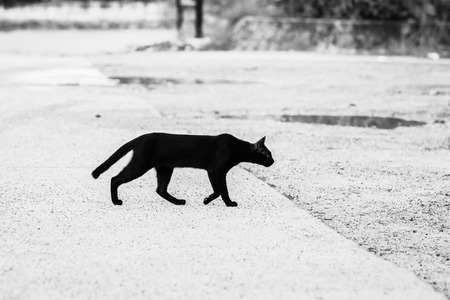 Black and white pictures of black cats walking through the road to the other side Giving a feeling of loneliness, loneliness