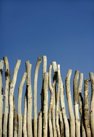 Wooden wall made of natural round striped wood trunks, blue summer sky photo