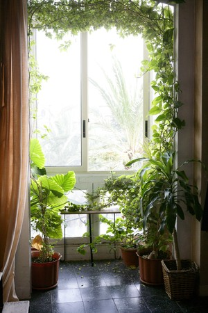 Backlit in a house room with plants, nice decoration light atmosphere photo