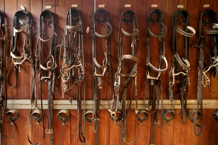 tacks: Horse riders complements, rigs, reins, leather over wood