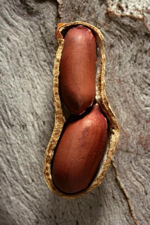 Peanuts macro over warm wood background photo