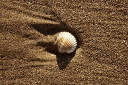beach sand texture with clam shells, shadows of morning sun Stock Photo - 4085591