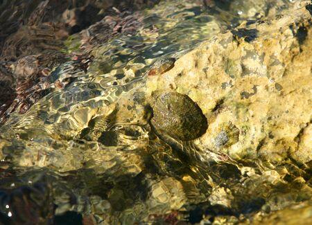 Marine rock texture detail on docks, barnacle photo