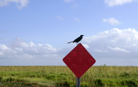 Crow black bird over a red signal in everglades, outdoor Florida photo