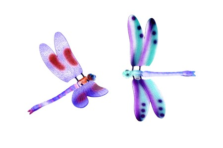two colorful dragonfly flying insects isolated over white photo