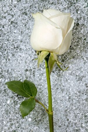 One beautiful white rose over a round glass drop balls texture photo