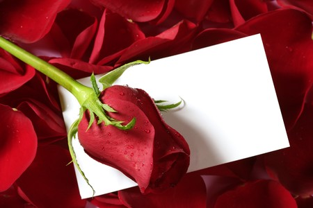 Red rose macro close up with a copy space blank note Stock Photo - 4575083