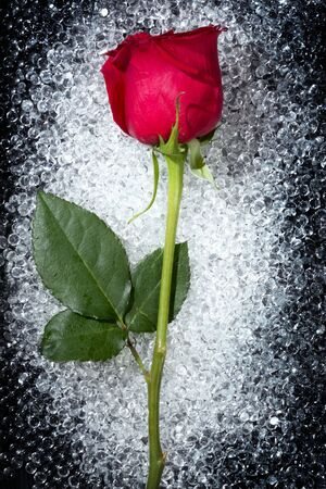 One beautiful red rose over a round glass drop balls texture photo