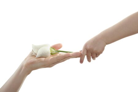 Daughter, son, giving mother a white rose, isolated on white photo