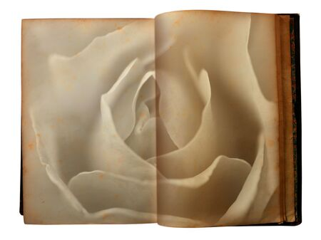 Rose printed on the pages of an open aged old book photo
