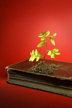 Plant growing from aged old book, birth concept, red background photo