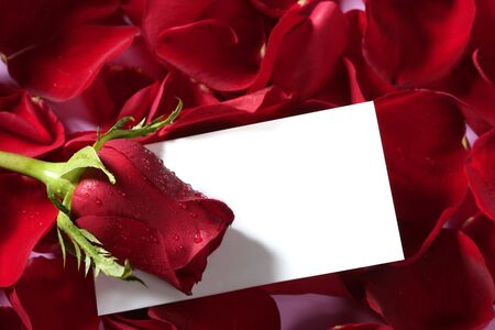 Red rose macro close up with a copy space blank note Stock Photo - 4634932