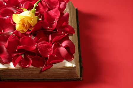 Rose petals over old aged book, red background photo