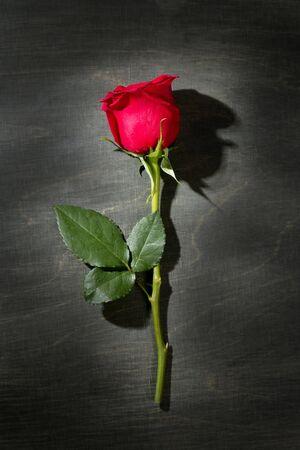 Red rose macro close up over dark black wood background photo