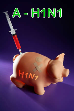 Pig influenza flu Injection, A h1n1 vaccine metaphor photo